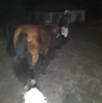 Evacuated: In the dark, Stine Herberg and an employee have to evacuate themselves and the horses from the folk high school they run.  Photo: Private