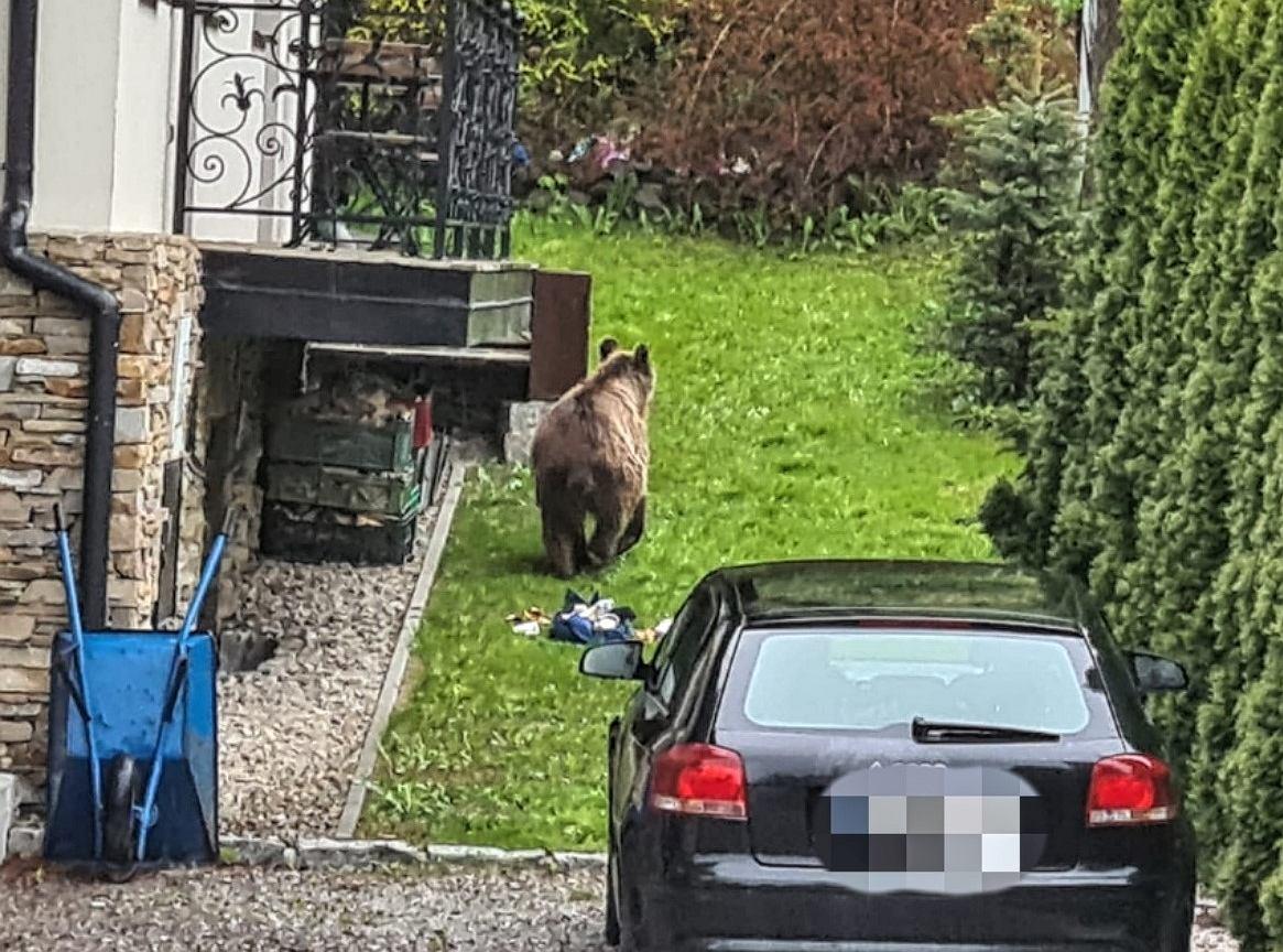 Bear - Illustrative photo