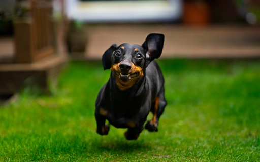 5 tips to help your dog lead a long, healthy life - Galileo Magazine