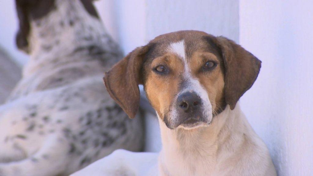 CCZ of Rio Preto conducts free tests for visceral leishmaniasis in dogs    Sao Jose do Rio Preto and Aratuba